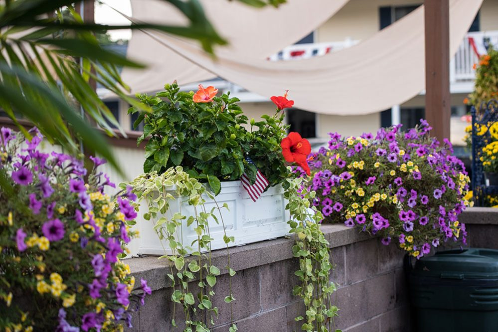 Beautiful flower pots resting near the Footbridge pool area