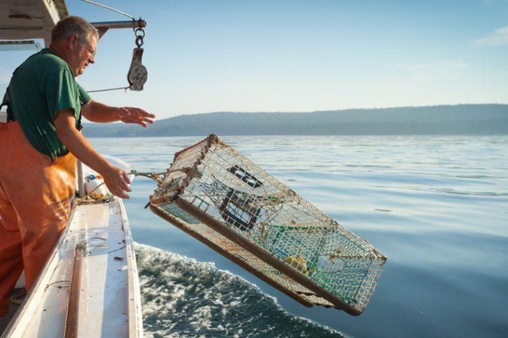 Man catching lobsters