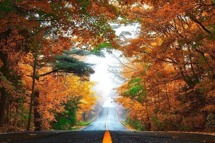 Road with falling leaves
