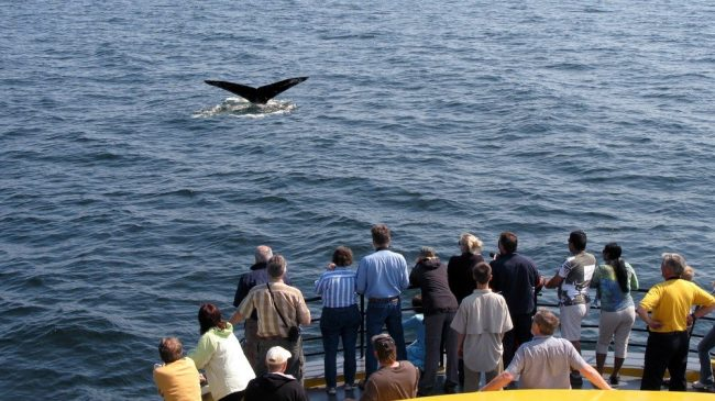 People watching a whale