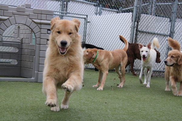 dogs running around at the Ogunquit dog park in Maine