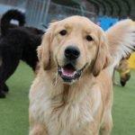 Happy dog playing at the Ogunquit dog park